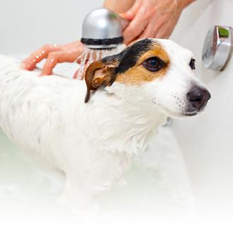 炭酸泉入浴による美容と健康のメカニズム